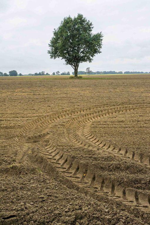 Vilja on puitu Puolan Wielkopolskassa, ja peltoja kynnetään ensi kautta varten.