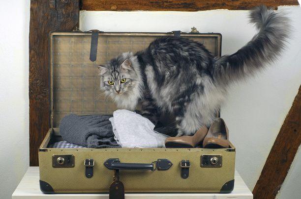 Kissa löysi miellyttävän piilopaikan.