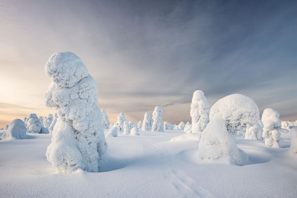 Tykkylumi peittää Riisitunturin puut talvisin.