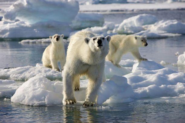 Brittiläinen dokumenttisarja kertoo, kuinka alkuperäinen luonto-ohjelma tehtiin. Se pureutuu elämään arktisilla napa-alueilla.