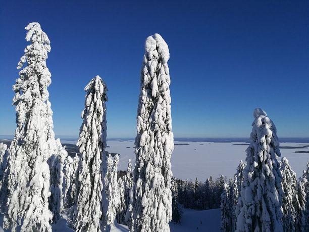 Koli on Suomen kansallismaisema.