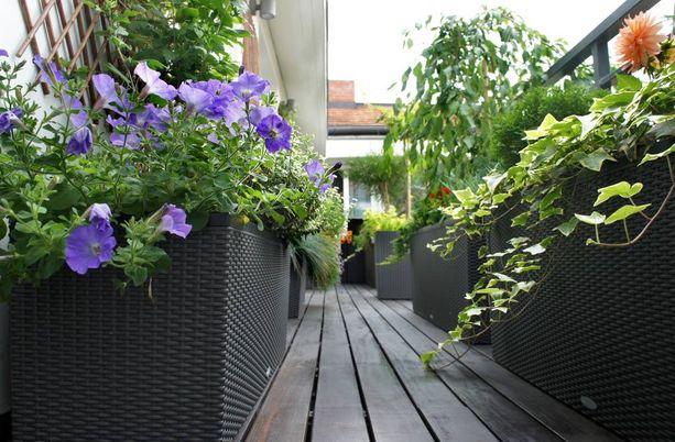 Parvekkeesta saa rakennettua isoilla ruukuilla tyylikkään viherolohuoneen.
