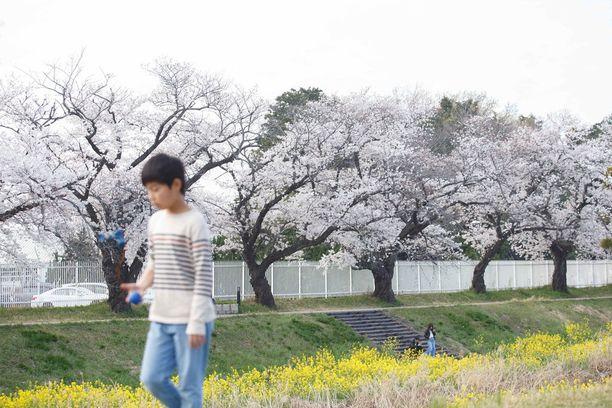Kaikenikäiset nauttivat keväisestä näystä.
