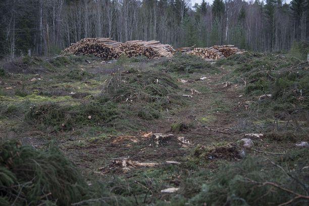 Parlamentin kantaa vastustaneet suomalaismepit ovat esittäneet huolta esimerkiksi siitä, että kansallisiin toimiin metsissä puututtaisiin.