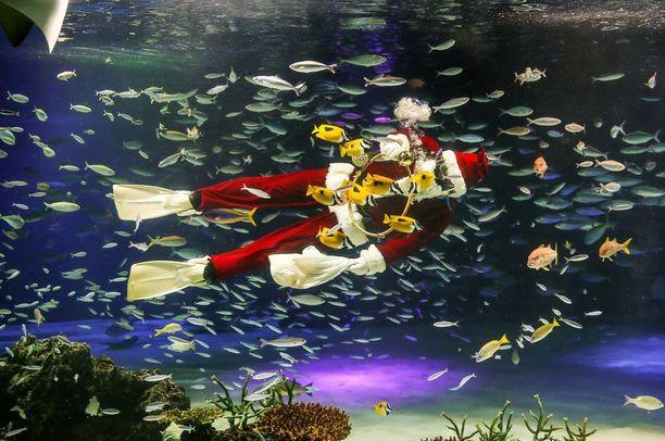 Japanissakin pukki ehti sukeltelemaan kalojen seassa.