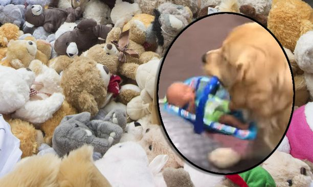 Mandatory Credit: Photo by Shutterstock (6673727h)Pile of teddies representing dead Syrian childrenRally for Aleppo outside Downing Street, London, UK - 22 Oct 2016Children join a rally in Whitehall calling on the government save the children of Aleppo
