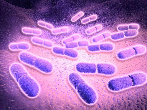 Listeriabakteerin aiheuttama listerioosi voi pahimmillaan johtaa kuolemaan.