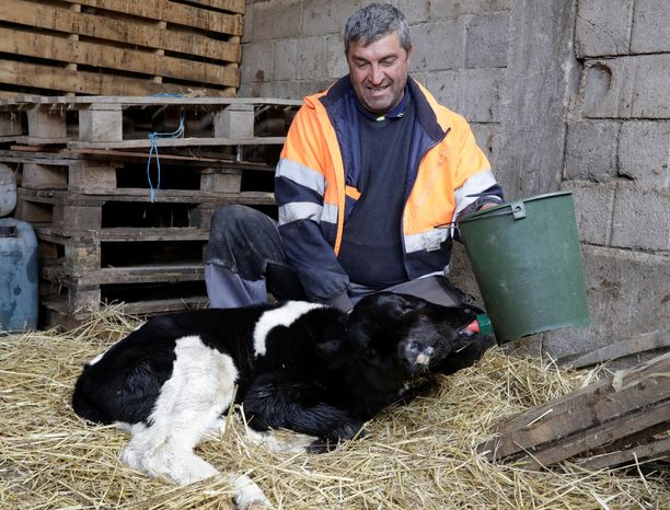 Vasikka syntyi huhtikuun 16. päivä maanviljelijä Vasko Petrovskin tilalle.