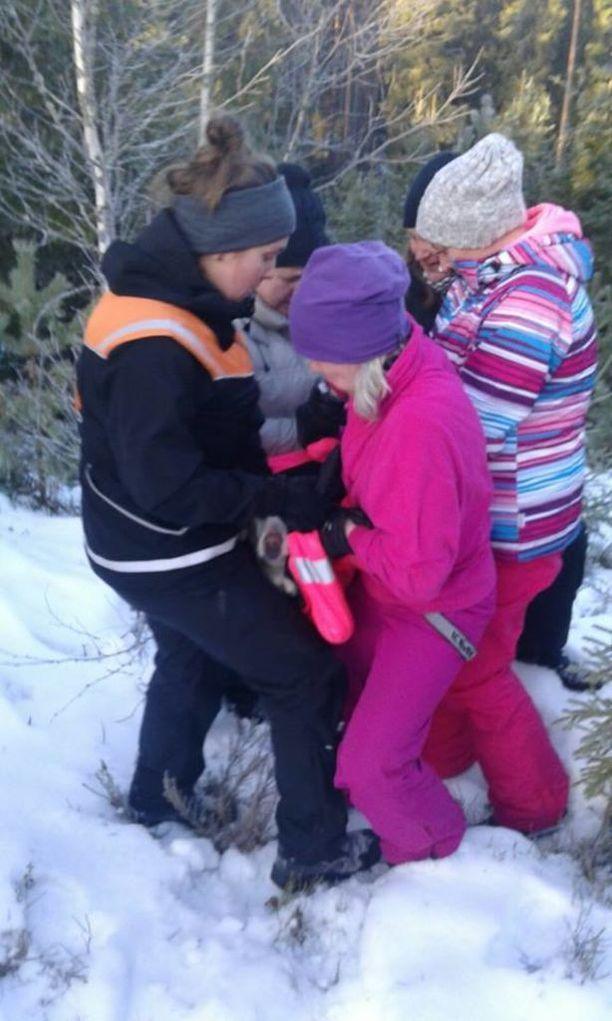 Viisi naista joutui kantamaan Alman takin päällä rotkosta autolle, koska koira oli niin voipunut ja sokissa.