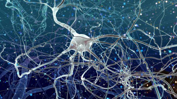 Sikojen aivotoiminta saatiin osittain elvytettyä tunteja eläinten teurastamisen jälkeen.