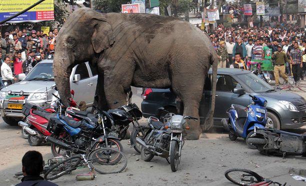 Elefantti tuhosi autoja, moottoripyöriä ja taloja.