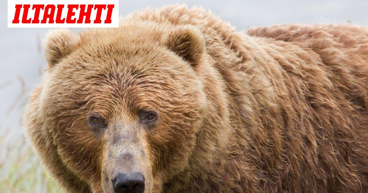 Mitä Karhu Syö