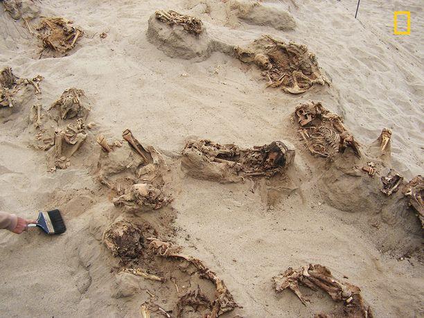 Ensimmäiset lapsiuhrit kaivettiin maasta jo vuonna 2011. Ruumiiden jäänteet olivat säilyneet kuivassa hiekassa yli 500 vuotta.