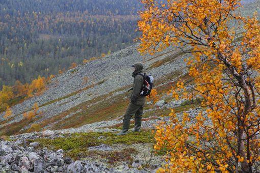 Pallas-Yllästunturin kansallispuistosta löytyy satoja kilometrejä merkittyä reittiä.
