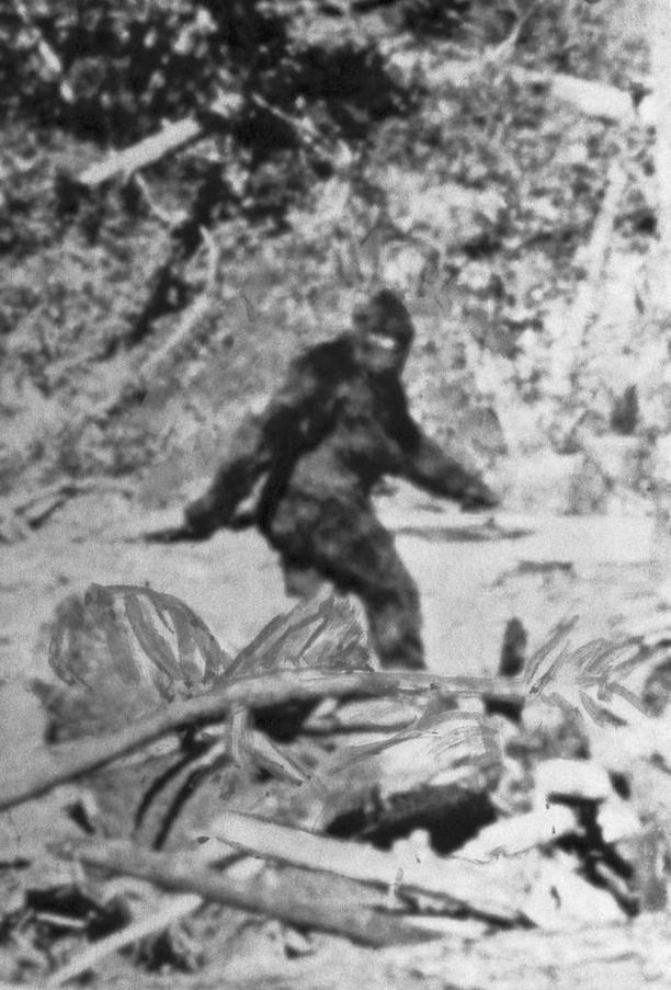 Ruutukaappaus Roger Pattersonin 1967 Pohjois-Kaliforniassa kuvaamasta filmistä, jolla esiintyy väitetysti isojalka.