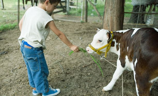 Maatilojen lapsilla on vähemmän astmaa ja atopiaa.
