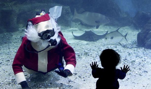 Australiassa pukki on nähty sukeltelemassa meriakvaariossa.