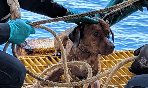 Nimen Bonrood-saanut koira oli saattanut pudota kalastusalukselta.