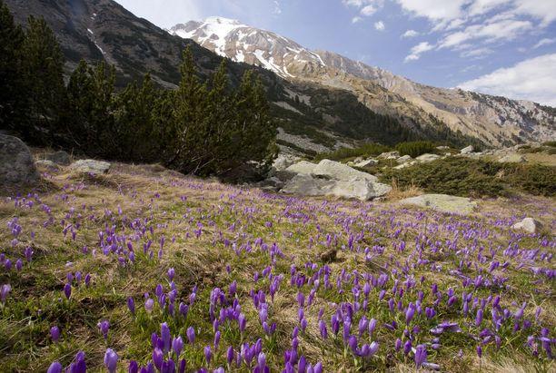 Pirinin kansallispuisto osoittaa, että Bulgaria on paljon muutakin kuin rantalomakohde.
