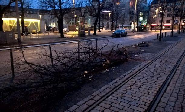 Puu kaatui törmäyksessä varhain sunnuntaiaamuna.