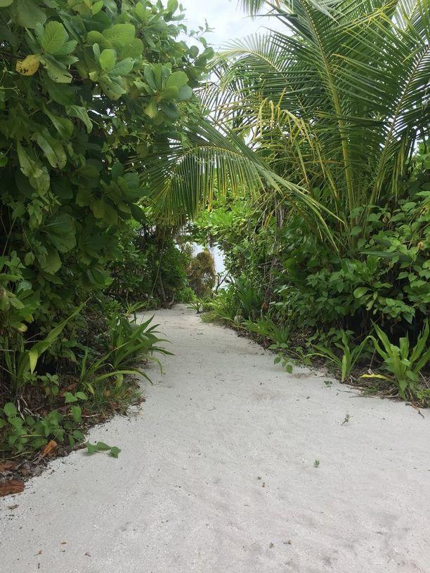 Runsas kasvillisuus kehystää saaria.
