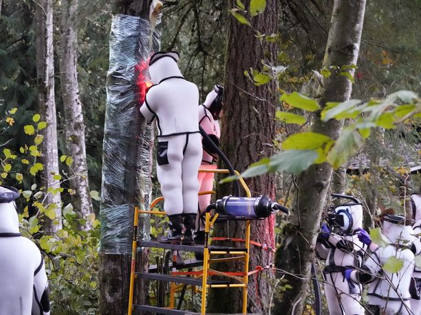 Tiettävästi ensimmäinen Yhdysvalloista löydetty kiinanherhiläisten pesä hävitettiin onnistuneesti lauantaina, Washingtonin osavaltion maatalousministeriö ilmoittaa.