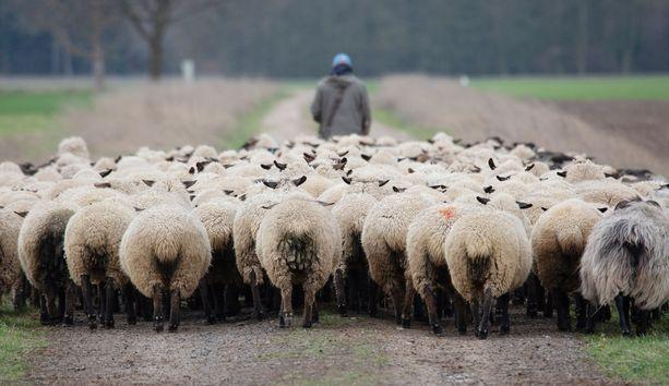 Ranskan maanviljelijät opettelevat elämään yhdessä susien kanssa. Sudet ovat suojeltuja, mutta farmarit ovat vaatineet oikeutta tappaa sudet, jos ne käyvät heidän eläimiensä kimppuun