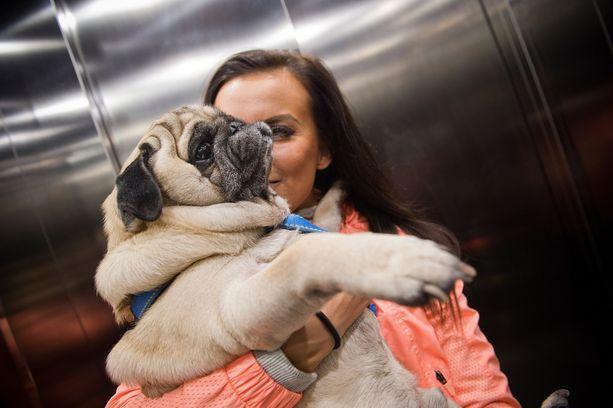 Pinnalliset pukukoppikeskustelut kuulostavat siltä kuin oltaisiin koiranäyttelyssä. Pepin Pena-mopsia ei ulkonäköhuolet paina.