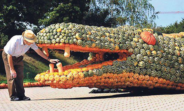 Kasvitaidetta Saksassa ihmeteltiin valtavaa krokotiiliveistosta, joka oli rakennettu kokonaan kurpitsoista. Kurpitsakrokotiili oli näytteillä vihanneksia suoraan kuluttajille myyvän maatilan pihalla.