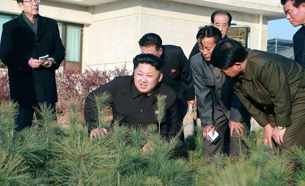 Kim Jong-unin luotsaama Pohjois-Korea on palannut tutun tylylle linjalle.