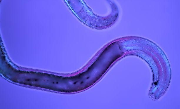Sukkulamadot selvisivät hengissä yli 40 000 vuoden pakastamisesta. Sukkulamadot pystyvät muun muassa korjaamaan DNA:han tulleita virheitä.
