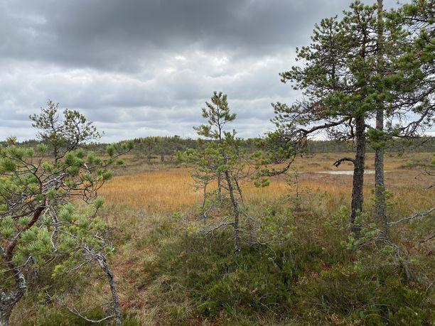Valkmusan viehätys piilee avarassa maisemassa.