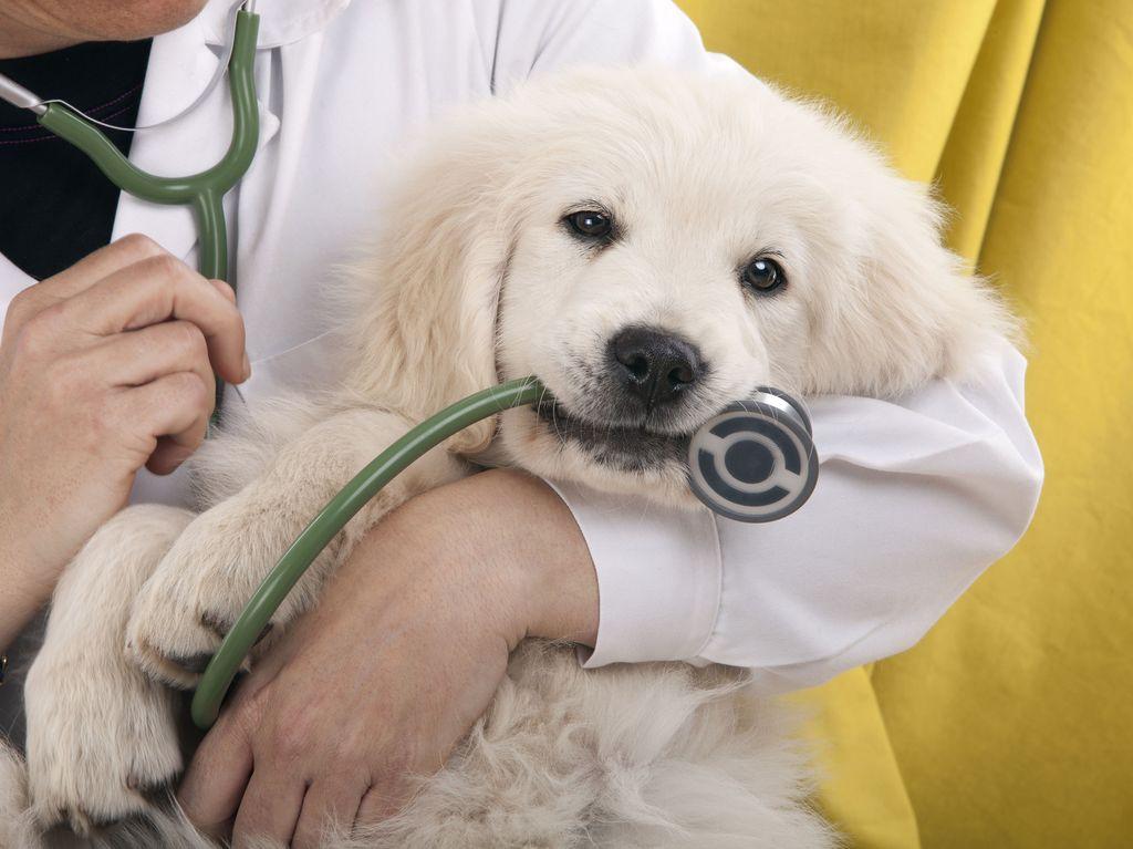 Lemmikkien säännölliset eläinlääkärikäynnit ovat tärkeitä paitsi elänten myös ihmisten terveyden vuoksi.