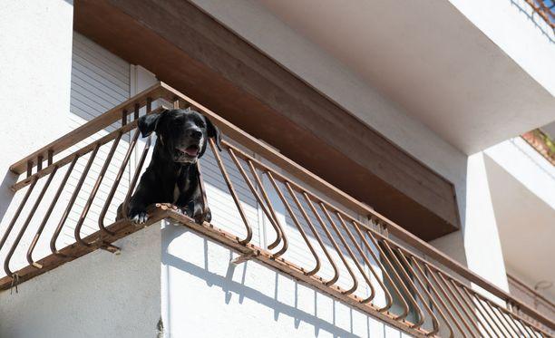 Lemmikkien jättäminen kuumalle parvekkeelle huolestuttaa eläinsuojeluneuvojaa. Kuvituskuva.
