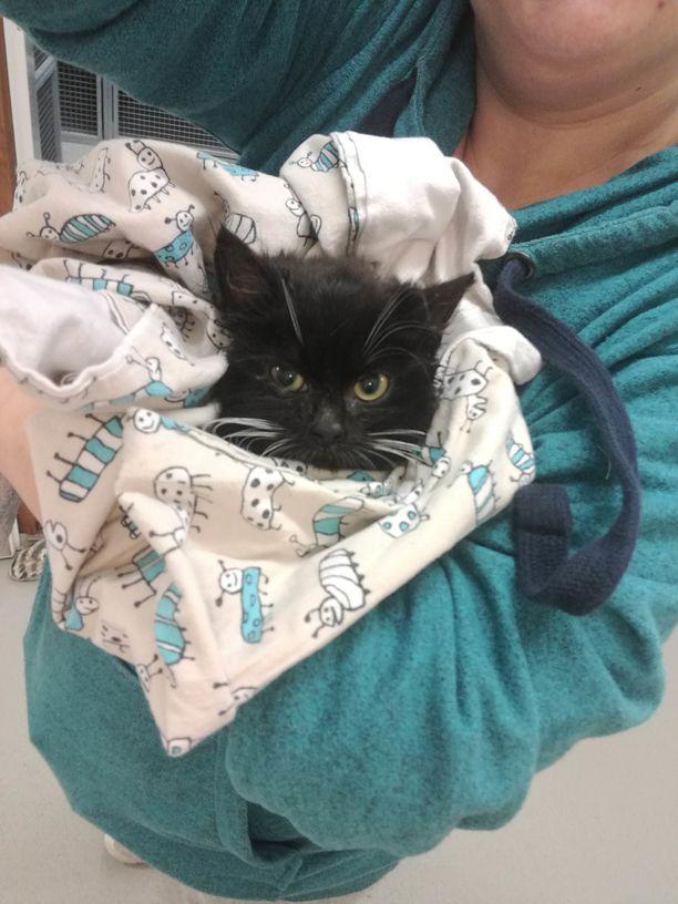 Kissanpentu saa nyt erinomaista hoitoa.