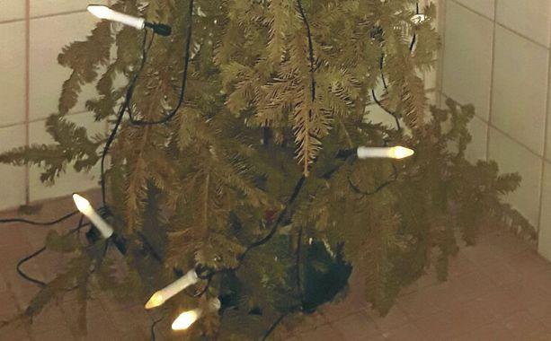 Tämä joulukuusi näkee jo kolmannen joulunsa. Jouluvalot ovat palaneet kuusessa yhtäjaksoisesti jo noin 18 000 tuntia.