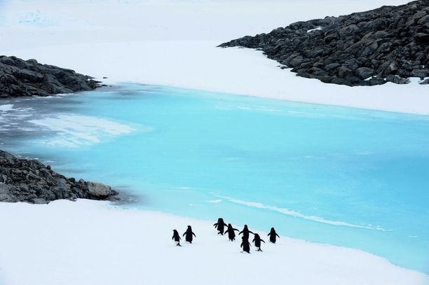 PIngviinejä Etelänapamantereella.
