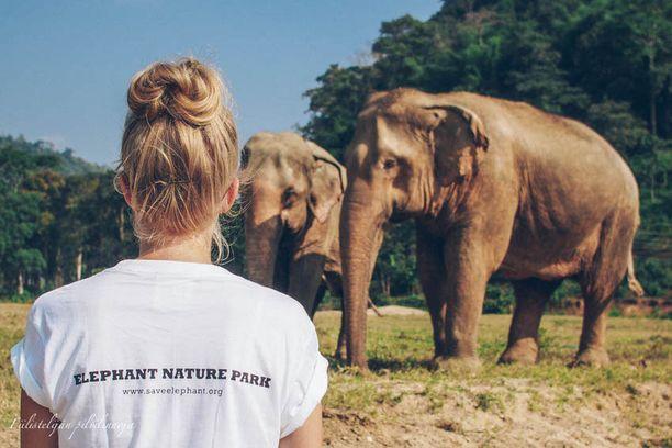 Thaimaassa sijaitseva Elephant Nature Park antaa upeille eläimille täysin uuden elämän.
