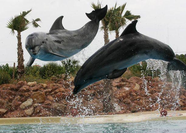 Attican eläinpuistossa Kreikassa on ennestään pullonokkadelfiinejä.