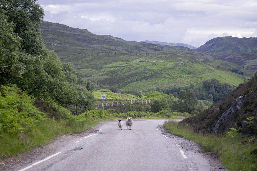 Loch Ness -järven ympäristöstä on etsitty kuuluisaa hirviötä.