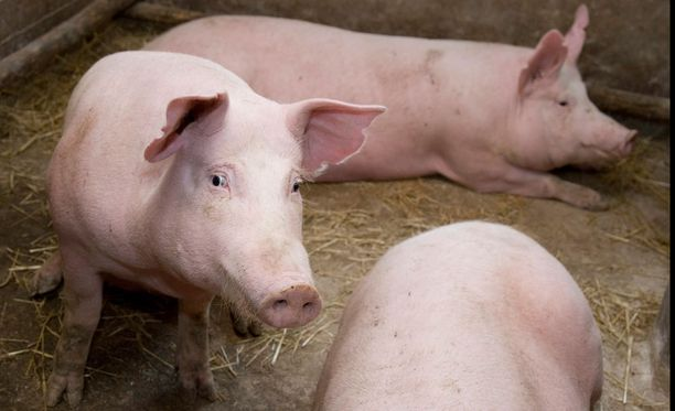 Uudessa eläinsuojelulaissa ollaan saattamassa eläinseksiä jälleen rikokseksi.
