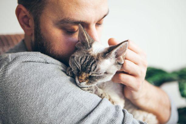 Kissanomistajan positiiviset piirteet ovat yhteydessä kissan seurallisuuteen.