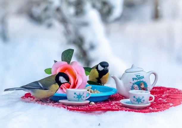 Minna-puoliso innostui ideoimaan Eerolle tekoon teeaiheisia lintulautoja.