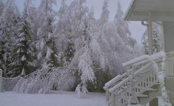 Puut suorastaan notkuvat lumesta. Sähköverkkoyhtiö Elenian viestintäjohtaja Heini Kuusela-Opas totesi tänään sähkökatkoksia koskevassa tiedotustilaisuudessa, että lumen alla taipuva puu on kaunis näky kaikille muille, paitsi energia-alan ammattilaiselle.