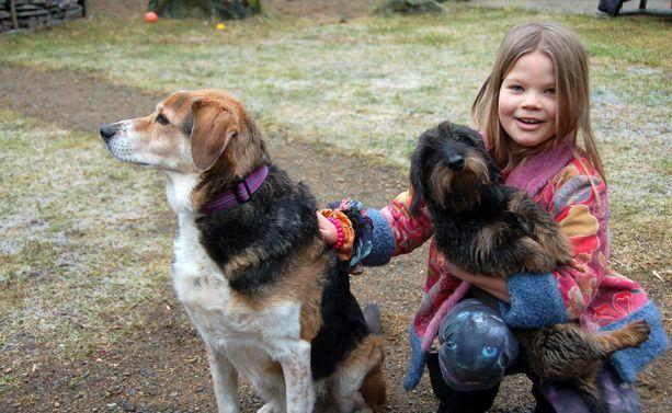 Sekarotuisen Pipan ja karkeakarvaisen mäyräkoiran Reiskan sirut on rekisteröity Kennellittoon. Kuvassa koirien kanssa on perheen yhdeksänvuotias Sylvi Häikiö.