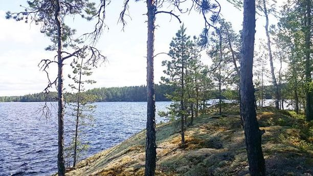 Suomen Kiinteistövälittäjien toimitusjohtajan Jussi Mannerbergin mukaan saaressa sijaitsevan mökin voi saada nyt hyvällä hinnalla.