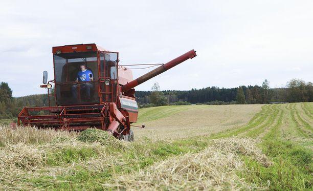 EU ei suostu antamaan tukea kuivuusongelmien kanssa kamppaileville maanviljelijöille. Kuvituskuva.