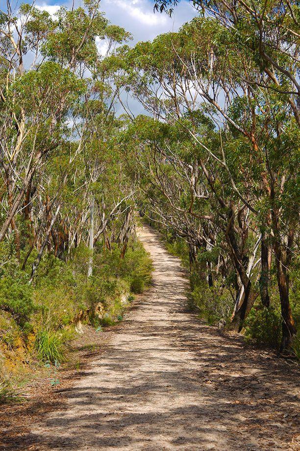 Epäilty väkivallanteko tapahtui 1000 kilometriä pitkän Bibbulmun vaellusreitin alkupäässä Perthin lähellä. Kuvituskuva.