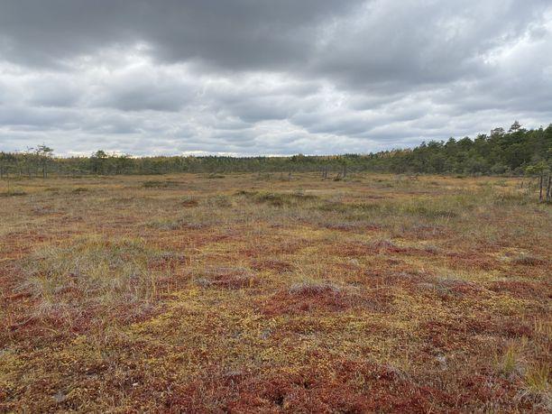 Valkmusa on suosituimmillaan syys- ja lokakuussa. Silloin suon väritys hivelee silmää, eikä hyönteisistä ole riesaa.