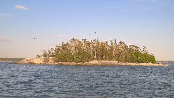 Keväällä 2016 hehtaarin kokoisella saarella oli Timo Metsolan mukaan jopa 2 500 merimetsoa, kun poikaset lasketaan mukaan.